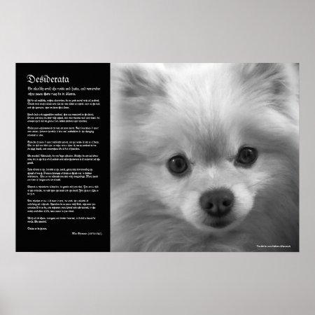 Desiderata - Fine Art Pomeranian Puppy Poster