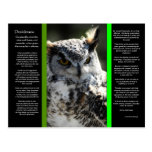 DESIDERATA Great Horn Owl Postcard 2