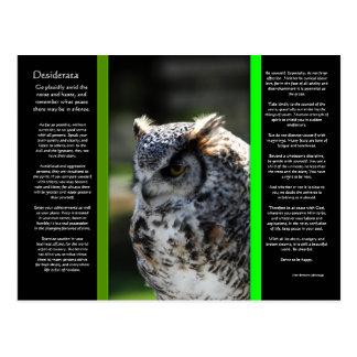 DESIDERATA Great Horn Owl Postcard 6