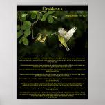 Desiderata Hummingbird Posters 3