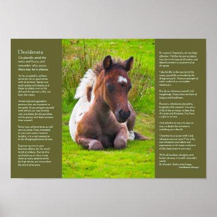 Desiderata Poem - Dartmoor Pony Foal Poster