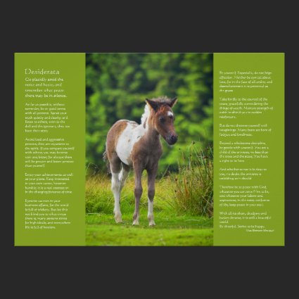 Desiderata Poem - Standing Dartmoor Pony Foal Poster