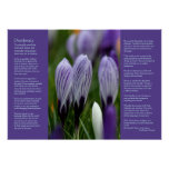 Desiderata Poem - Variegated Spring Crocuses Print