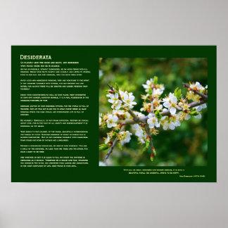 Desiderata - Sun-Dappled Spring Hawthorn Poster