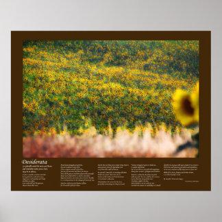 Desiderátums - campos del girasol en sol posters