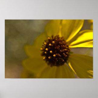 Desierto Brittlebrush en la floración Impresiones