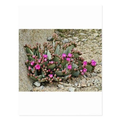 Desierto Color1 Postales
