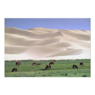 Desierto de Asia, Mongolia, Gobi. Caballos salvaje Fotografía