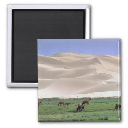 Desierto de Asia, Mongolia, Gobi. Caballos salvaje Iman