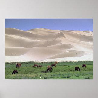Desierto de Asia, Mongolia, Gobi. Caballos salvaje Impresiones
