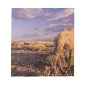 Desierto de Asia, Mongolia, Gobi, gran Gobi Blocs