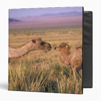 "Desierto de Asia, Mongolia, Gobi, gran Gobi Carpeta 1 1/2"""