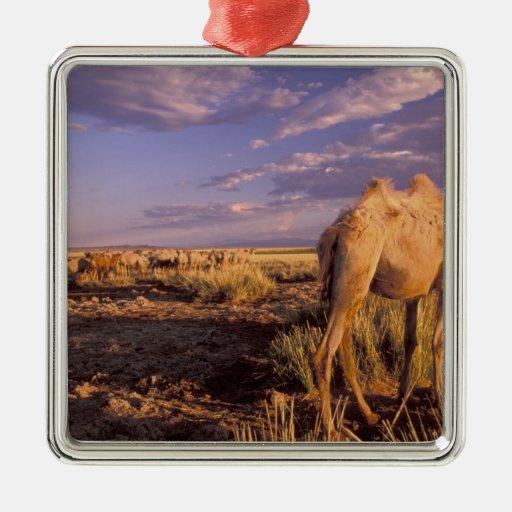 Desierto de Asia, Mongolia, Gobi, gran Gobi Adorno Cuadrado Plateado