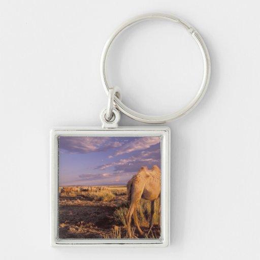 Desierto de Asia, Mongolia, Gobi, gran Gobi Llavero Personalizado