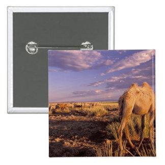 Desierto de Asia, Mongolia, Gobi, gran Gobi Pin