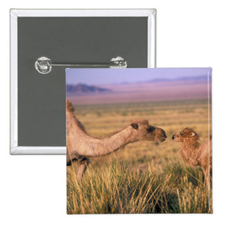 Desierto de Asia, Mongolia, Gobi, gran Gobi Pins