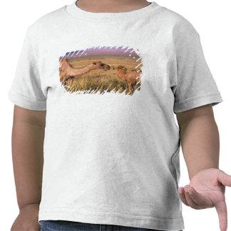 Desierto de Asia, Mongolia, Gobi, gran Gobi Camisetas
