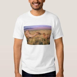 Desierto de Asia, Mongolia, Gobi, gran Gobi Remera
