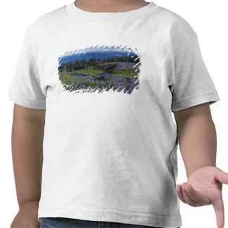 Desierto de los E.E.U.U., Washington Mt. Adams, Camisetas