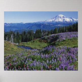 Desierto de los E.E.U.U., Washington Mt. Adams, pr Póster