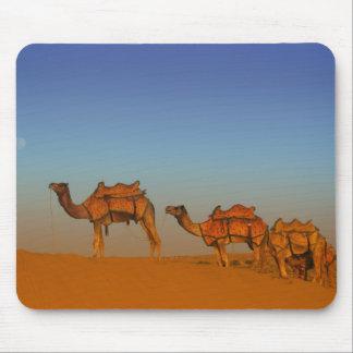 Desierto de Thar, Rajasthán la India. Camellos a l Tapetes De Raton
