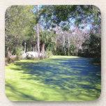 Desierto del río de la Florida