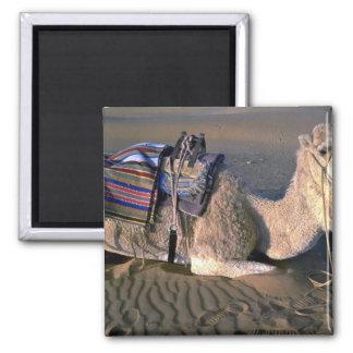 Desierto del Sáhara cerca de Merzouga, Marruecos Imán Cuadrado