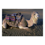 Desierto del Sáhara cerca de Merzouga, Marruecos Impresiones