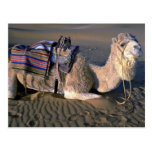 Desierto del Sáhara cerca de Merzouga, Marruecos Tarjeta Postal