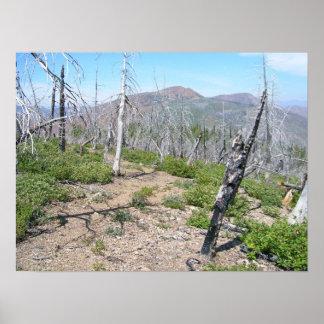 Desierto máximo de Kalmiopsis del puesto de observ Póster