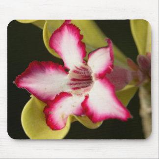 Desierto-Rosa (Adenium Obesum), Suráfrica Alfombrilla De Ratones