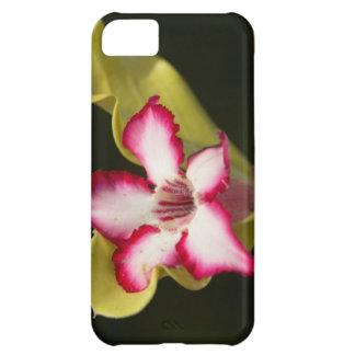 Desierto-Rosa (Adenium Obesum), Suráfrica Funda Para iPhone 5C
