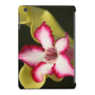 Desierto-Rosa (Adenium Obesum), Suráfrica Funda Para iPad Mini Retina