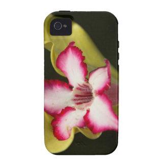 Desierto-Rosa (Adenium Obesum), Suráfrica Vibe iPhone 4 Carcasas
