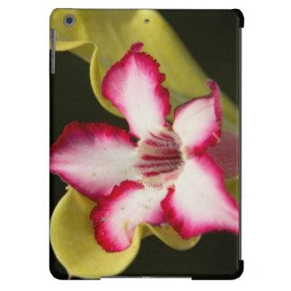 Desierto-Rosa (Adenium Obesum), Suráfrica Funda Para iPad Air