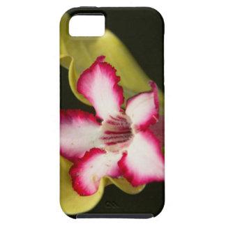 Desierto-Rosa (Adenium Obesum), Suráfrica Funda Para iPhone 5 Tough