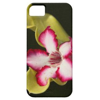 Desierto-Rosa (Adenium Obesum), Suráfrica iPhone 5 Funda