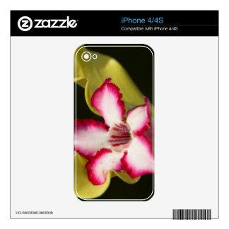 Desierto-Rosa (Adenium Obesum), Suráfrica iPhone 4 Skin