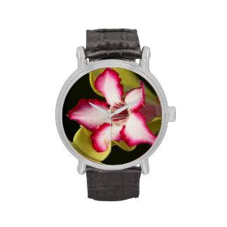 Desierto-Rosa (Adenium Obesum), Suráfrica Relojes