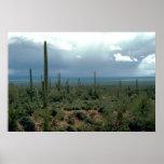 Desierto y cactus de Arizona Póster