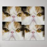 Design Cat Poster