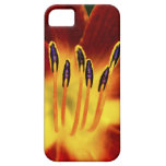 Desire iPhone 5 Cover