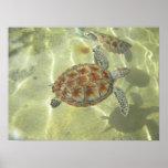 Deslizamiento de la tortuga de mar verde impresiones