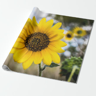 Deslumbramiento soleado papel de regalo