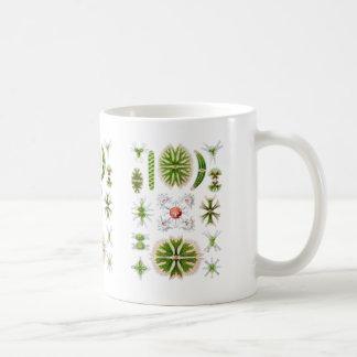 Desmids Mug