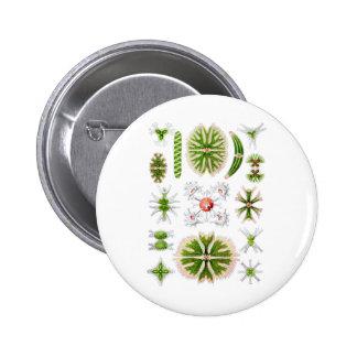 Desmids Pinback Button