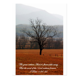 Desolate Tree Postcard