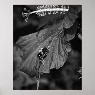 Desplazamiento de la abeja póster