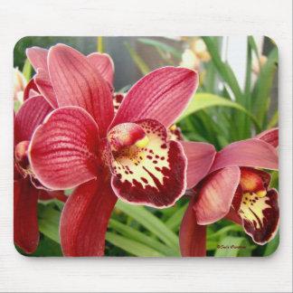 Destacados de la orquídea tapete de raton