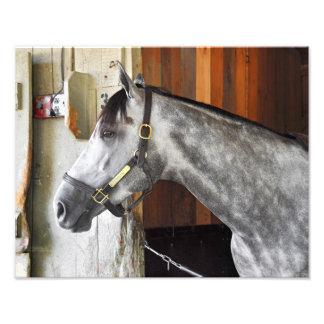 Destin - asilo del caballo fotografía